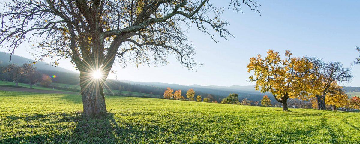Mitten im Grünen: Die Grüne Au, das Wellnesshotel in der Steiermark mit tollen Angeboten